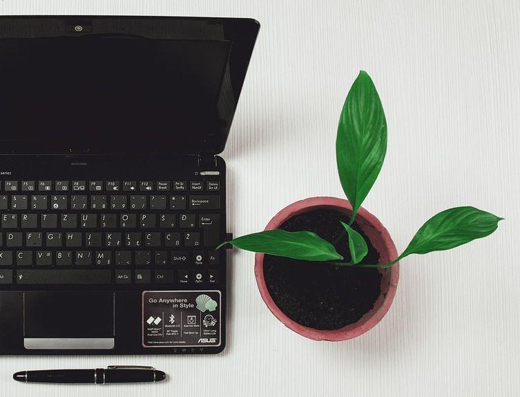 Moeite Met Studeren? Koop Een Plant!