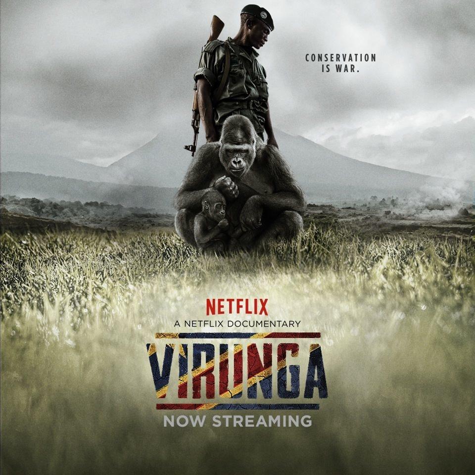 Virunga: Uitstervende Berggorillas En Oliedomheid