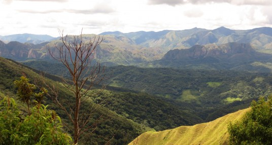 Van boskap tot bieflap: Duurzaamheid in Bolivia