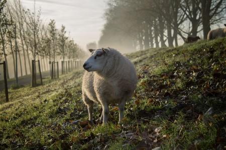 Onder de wol kruipen: een duurzame keuze!