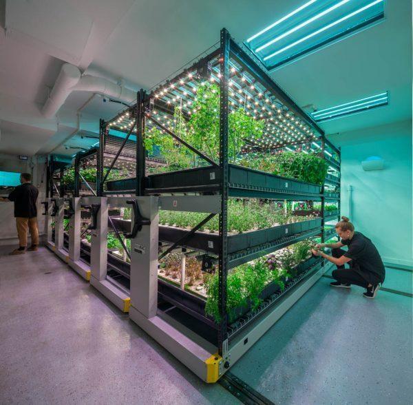 Vertical Farming: De Oplossing Voor Het Voedselprobleem?