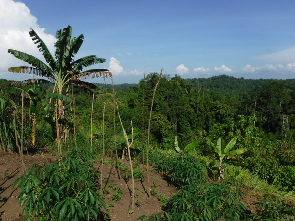 To Do List: Zet Een Moestuin Op In Papoea-Nieuw-Guinea!
