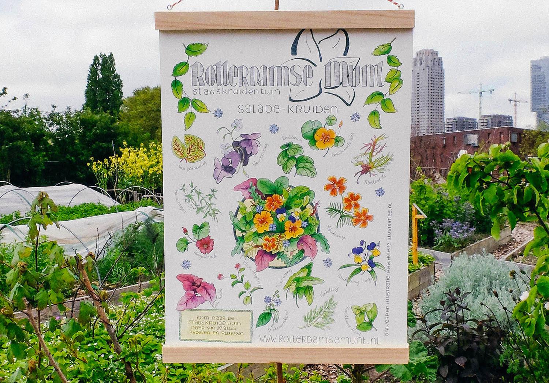 Duurzame Hotspot: Stadstuin Rotterdamse Munt