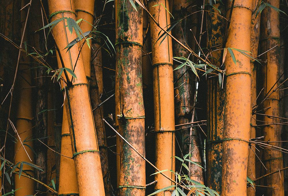 Waarom Bamboe Een Beter Alternatief Is Voor Katoen