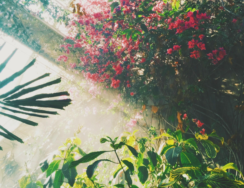 Natuur In De Tuin: Hoe Willen We Vooruit?