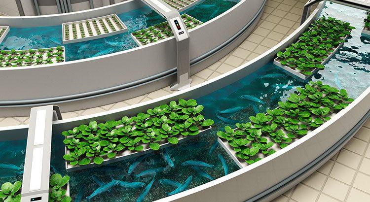 Aquaponics: Voedsel Verbouwen Voor De Toekomst?