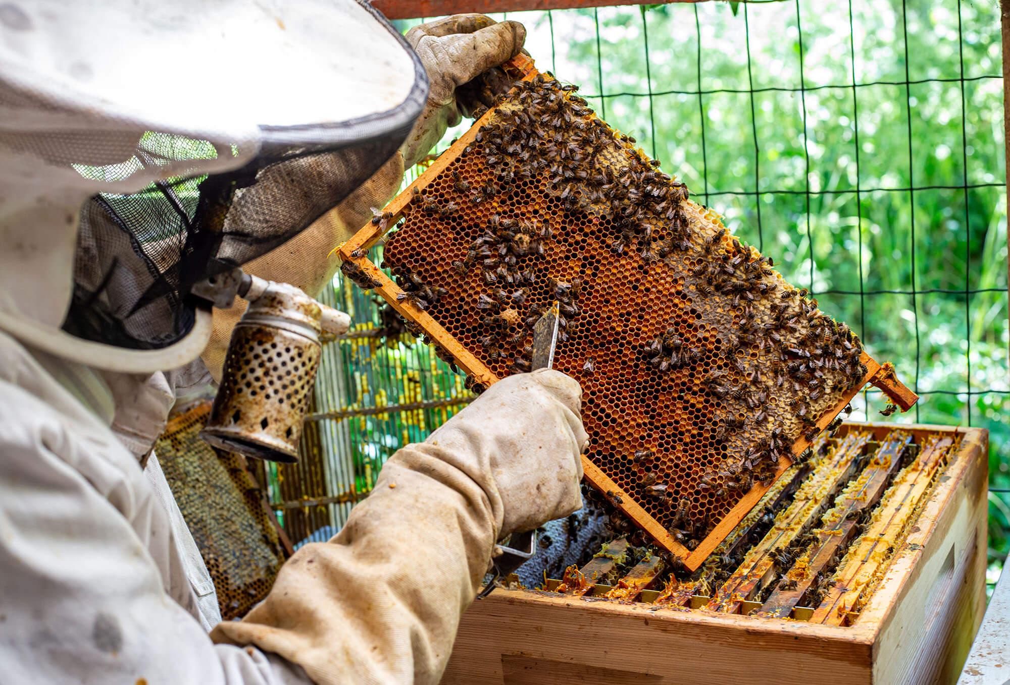 Natuur In De Drukke Stad: Wilde Bijen Werken Voor Een Plekje