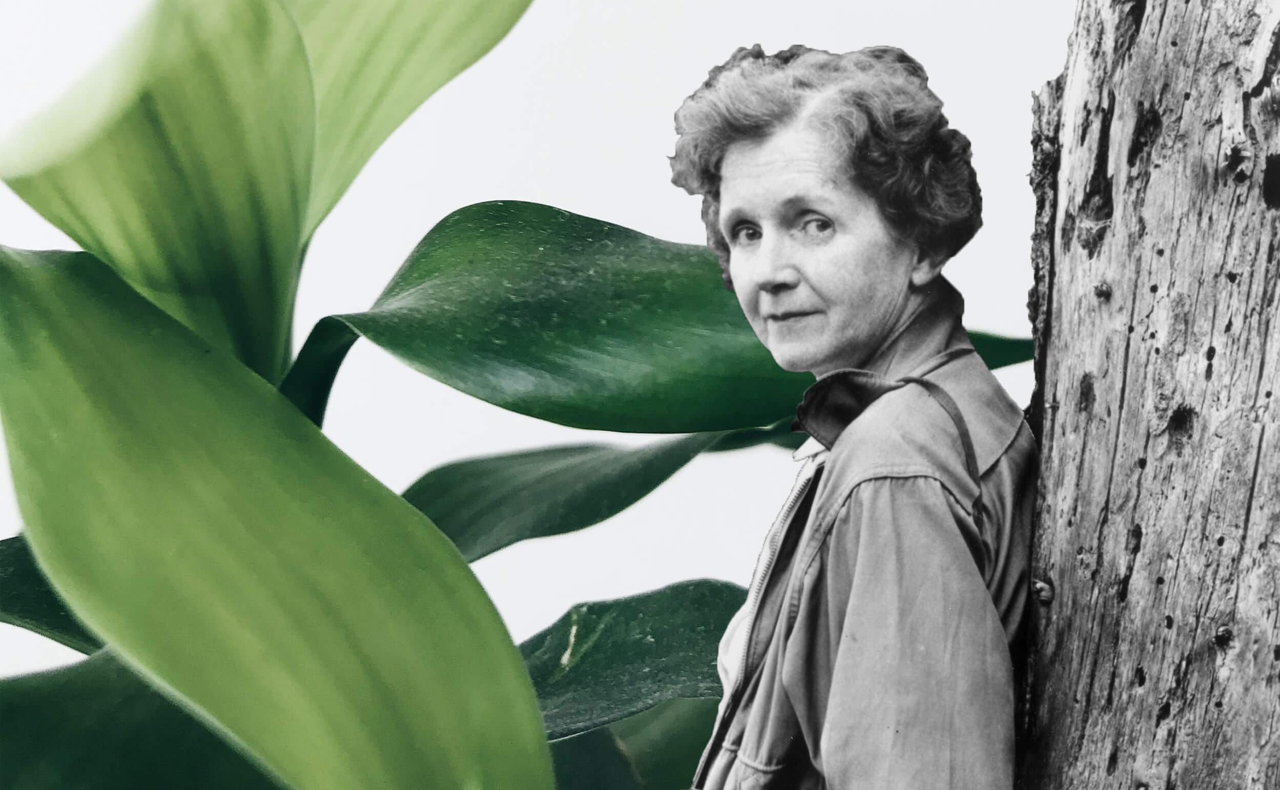 Deze Drie Studenten Gingen Ervandoor Met De Rachel Carson Afstudeerprijs